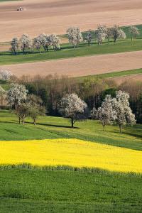Landschaft Österreich, Marktnische finden